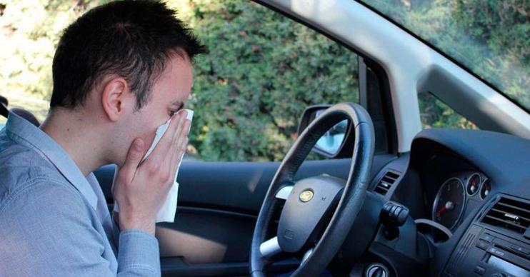conductores con alergia
